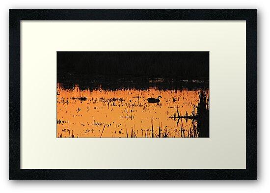 Sunset Swim by Greg Belfrage