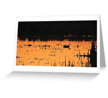 Sunset Swim Greeting Card