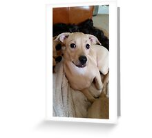 Pretty Posing Puppy Greeting Card