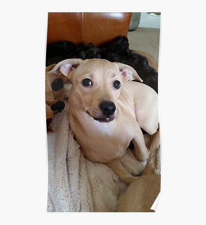 Pretty Posing Puppy Poster
