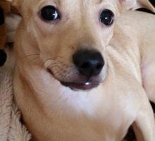 Pretty Posing Puppy Sticker