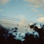 Birdies by Laura Williams