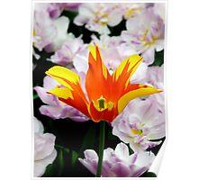 Tulipa - Fire Wings - II Poster