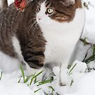 Winter cat by Laura Melis
