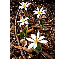 May Flowers Blooming in Forest Photographic Print