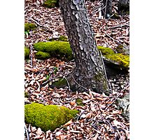 Forest Floor Brightens with Green Moss Photographic Print