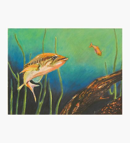 Bass and the Minnow Photographic Print