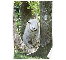 Daddy Sheep Poster