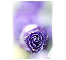 Purple breeze.... Poster