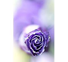 Purple breeze.... Photographic Print