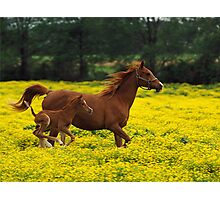 Baby Horse Running Photographic Print
