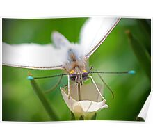 White butterfly on a white flower Poster