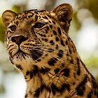 Leopard on High Alert by mlphoto