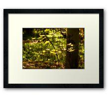 Golden Evening Woodland Leaves Framed Print