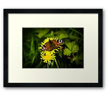 European Peacock Butterfly Framed Print