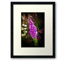 Foxglove in English Garden Framed Print
