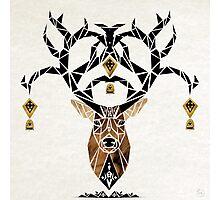 deer deer Photographic Print