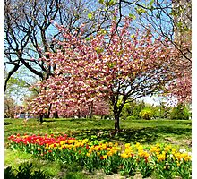 Spring in New York City  Photographic Print