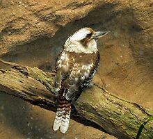 Majestic Kookaburra by eidann