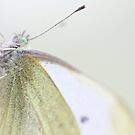 Small Cabbage White Butterfly by missmoneypenny
