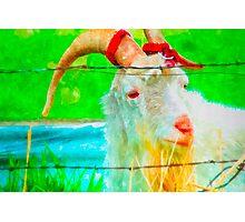 Idaho Billy Goat Photographic Print
