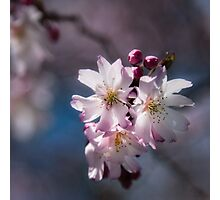 Blossoms in the Sun Photographic Print