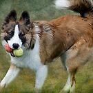 Bryn two balls by hampshirelady