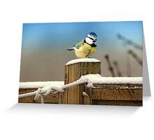 Winter Blue Tit Greeting Card