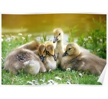 Spring arrivals Poster