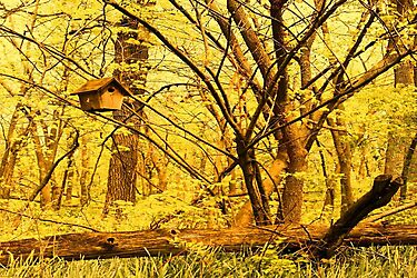 Golden Forest by CanoeComsArt