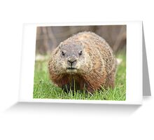 Spring has sprung, grass has riz - groundhog wondering where the girlies is Greeting Card