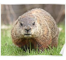 Spring has sprung, grass has riz - groundhog wondering where the girlies is Poster