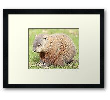 Saying grace Framed Print