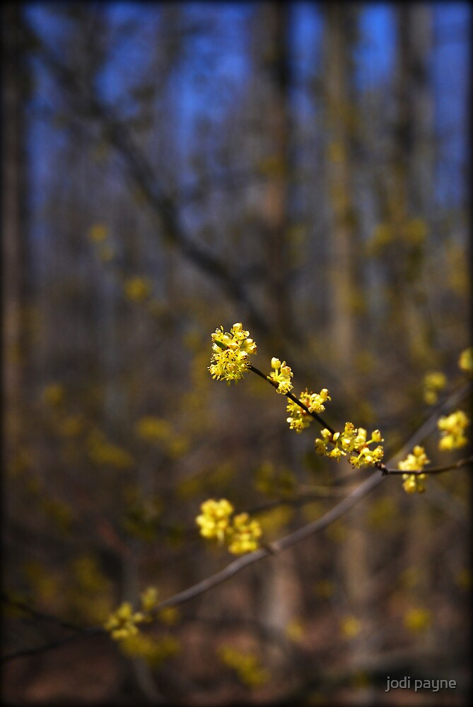 A Touch Of Spring by jodi payne
