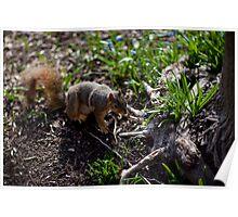 Spring Squirrel Poster