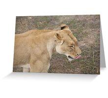 Lion Licking Lips Greeting Card