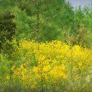 A Field of Yellow Autumn by Ginger  Barritt