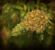 Wild Weeds by Ginger  Barritt