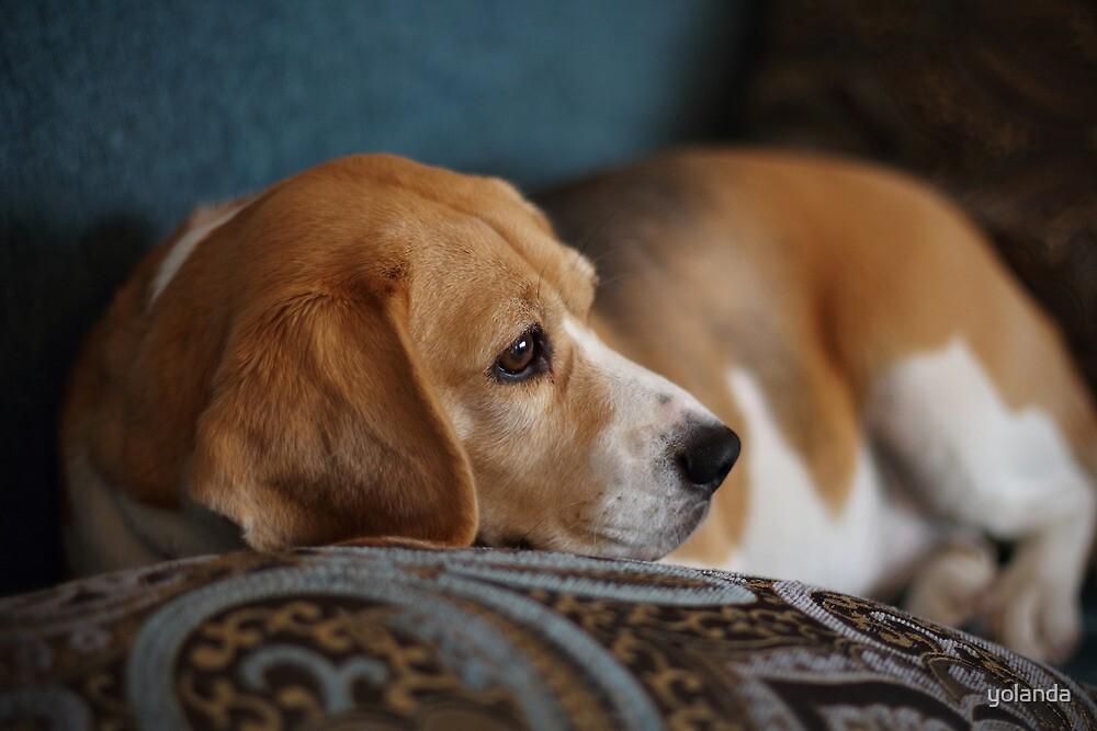 Daydream Doggie by yolanda