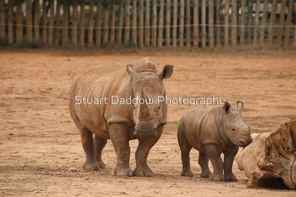 Baby Rhino & Mum by Stuart Daddow Photography