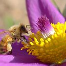 Honey Bee In Spring by Betsy  Seeton