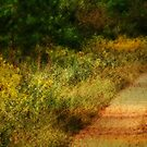 Country Road by Ginger  Barritt