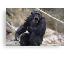 Singing Chimp Canvas Print