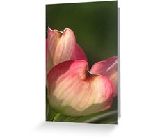 Petals of Pink Greeting Card