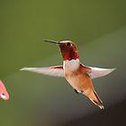Hummingbird in flight by KansasA