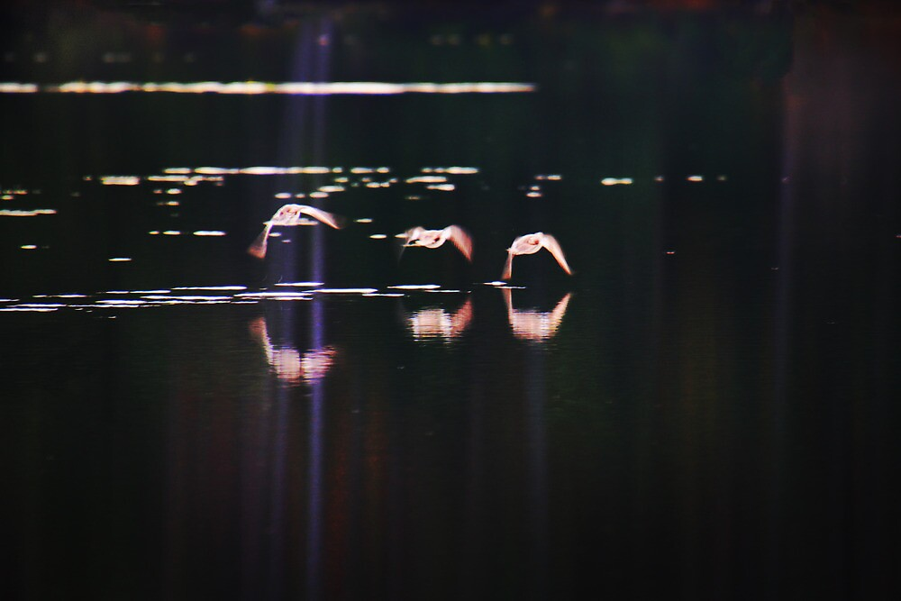 Ducks Over Black Waters by Nazareth