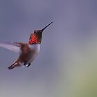 Hummingbird in flight 2 by KansasA