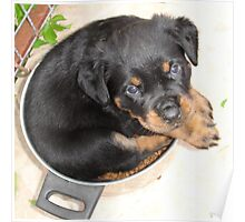 Female Rottweiler Puppy Curled In A Food Bowl Poster