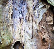 Beautiful Bark Abstract. #a by ronsphotos