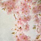 hanami by lucyliu